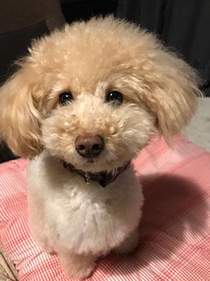 博士の愛犬マロン