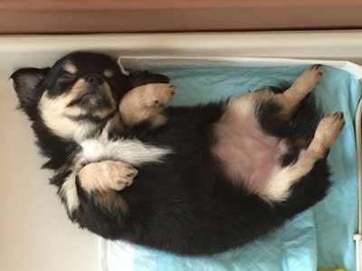 腸内環境を整えたい愛犬におすすめ