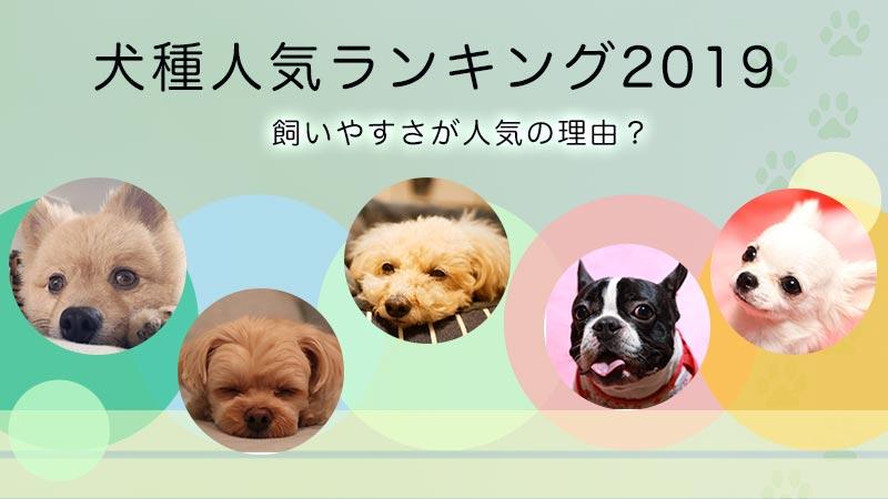 小型犬の人気ランキング