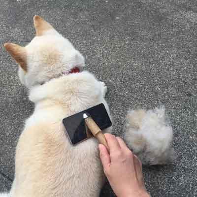 抜け毛の原因