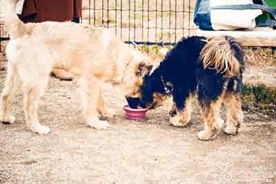 犬の排泄のタイミング