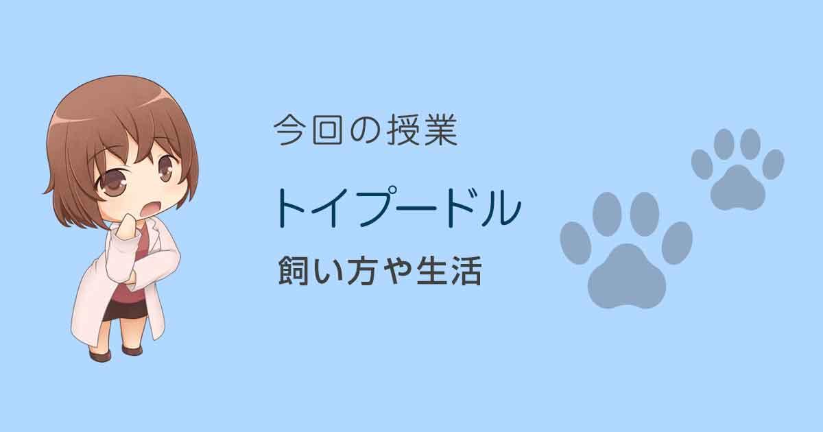 トイプードルの飼い方や生活