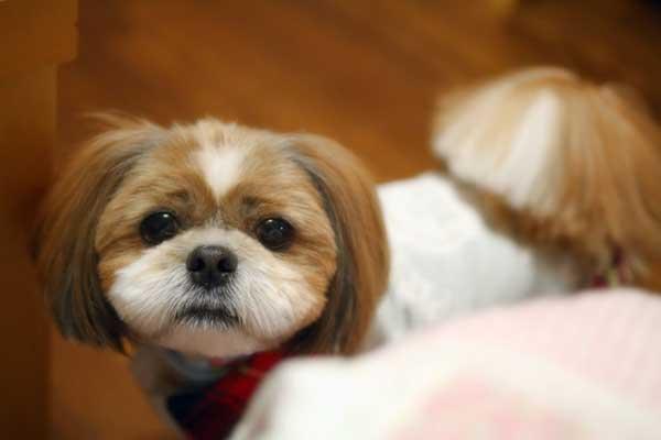 犬の胃腸炎の予防法