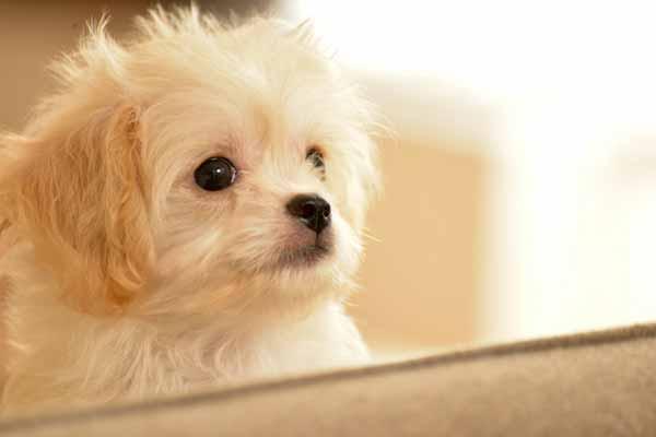 アカナドッグフードを与えたい犬の特徴
