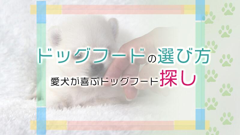 小型犬のドッグフードの選び方。愛犬が喜ぶドッグフードを探そう