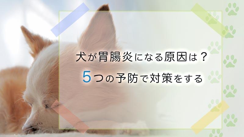 犬の胃腸炎を予防