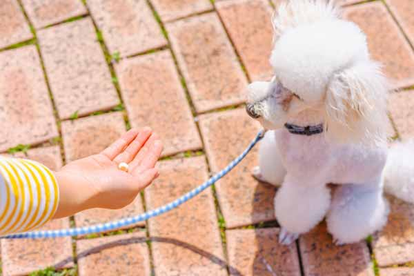 犬の胃腸炎の原因